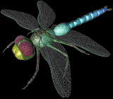 C3dragonfly.png
